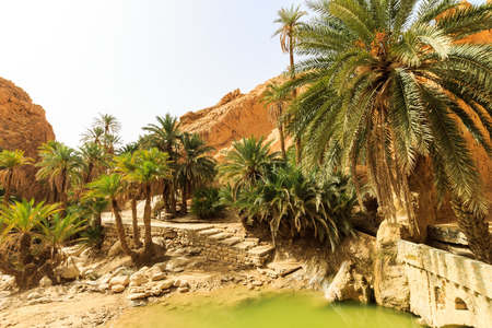 reserve: Landscape of oasis in the canyon in stone desert. Sahara at sunny day.