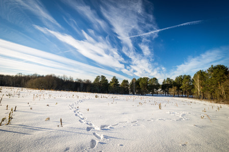 snowy field: Scene of a beautiful sunset at field covered with snow with trees at winter season