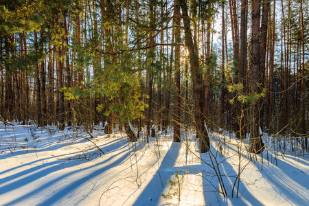 Scene of a beautiful sunrise at pine forest with bushes covered with frost at winter season. Ski run. Stock Photo