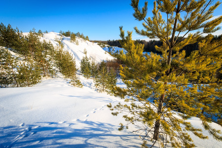 Landscape of hills covered with snow in winter with pines at foreground and blue sky background.