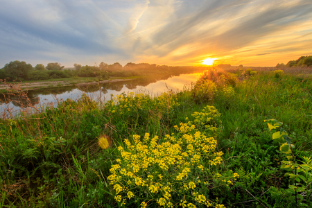 Scenic view of beautiful sunset above the river at summer with cloudy sky background and grass and yellow cinder flowers at foreground. Landscape.