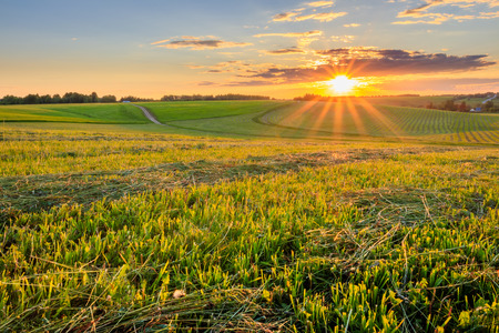 Sunset at cultivated land in the countryside on a summer evening with bkue sky background. Landscape.