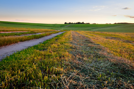 Road through cultivating the land in the countryside on a summer evening with bkue sky background. Landscape.