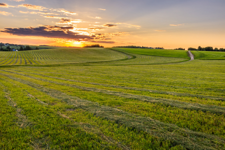 Sunrise at cultivated land in the countryside on a summer evening with bkue sky background. Landscape.