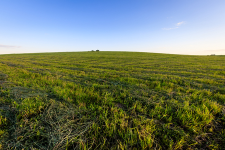 Cultivated land in the countryside on a summer evening with bkue sky background. Landscape.
