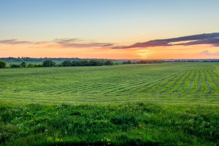 Twilight at cultivated land in the countryside on a summer evening with cloudy sky background. Procurement of food for animals. Combined field. Landscape.