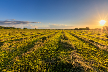 Sunset at cultivated land in the countryside on a summer evening with cloudy sky background. Procurement of food for animals. Combined field. Landscape.
