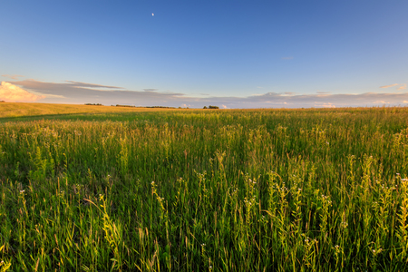 Cultivated land in the countryside on a summer evening with cloudy sky background. Stock Photo