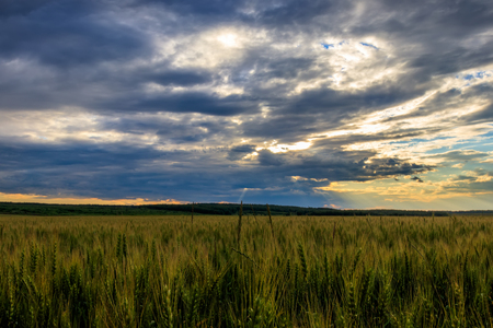 Lumen in the clouds over the rye field on a summer evening. Sunset scene. Landscape.