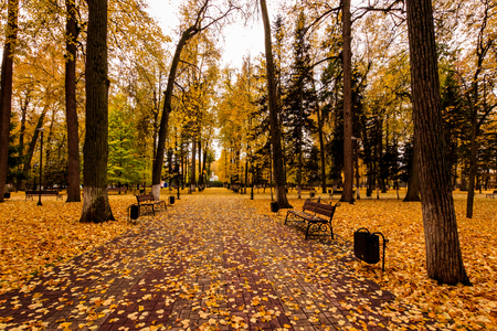 fallen tree: Leaf fall in the park in autumn. Landscape with lindens and other trees on a cloudy day.