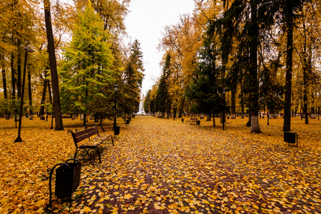 Leaf fall in the park in autumn. Landscape with lindens and other trees on a cloudy day.