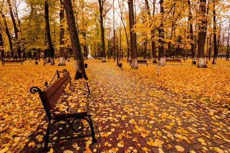 Leaf fall in the park in autumn. Landscape with lindens and bench on a foreground on a cloudy day. Stock Photo