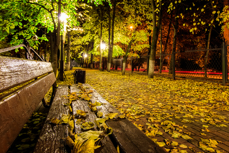 tilo: City night park in autumn with paths strewn, fallen yellow leaves, benches and linden trees. Landscape.