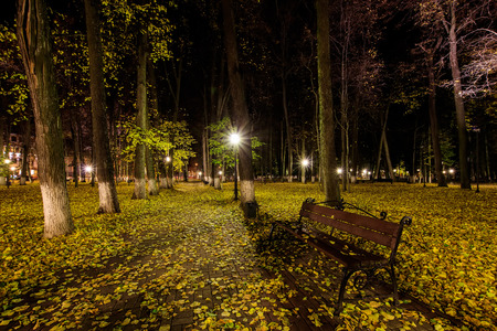 City night park in autumn with paths strewn, fallen yellow leaves, benches and linden trees. Landscape.