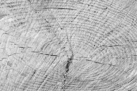 Log of pine tree texture. Abstract background for design. Monochrome. Stock Photo