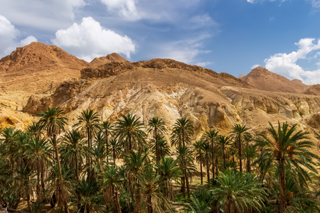 Landscape of oasis in the canyon in stone desert with cloudy sky in a background. Sahara at sunny day. Tunisia.