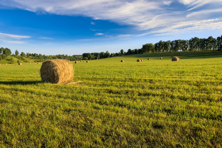 A field with stacks on a summer evening with a blue sky in the background. Procurement of animal feed in agriculture. Landscape. Foto de archivo