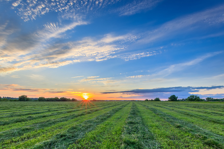 Sunset or sunrise at cultivated land in the countryside on a summer evening with cloudy sky background. Procurement of food for animals. Combined field.