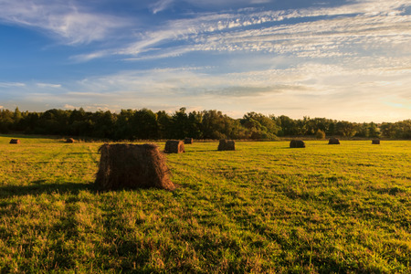 Field with haystacks at sunset in early autumn or summer evening.