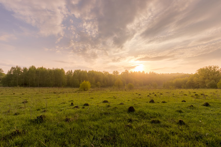 Sunset or dawn in a field with green grass and willows in the background. Early summer or spring. Landscape after rain with a light haze.