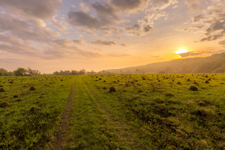 Sunset or dawn in a field with green grass, footpath and willows in the background. Early summer or spring. Landscape after rain with a light haze. Фото со стока