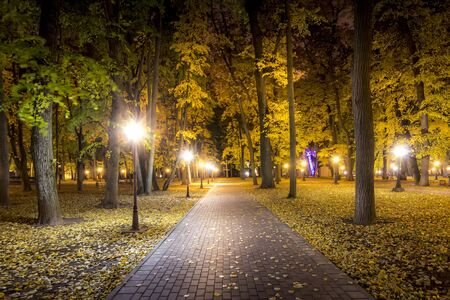 City night park in autumn with paths strewn with fallen yellow leaves and maple trees. Landscape.