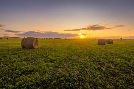 A field with haystacks on a summer or early autumn evening with a cloudy sky in the background. Procurement of animal feed in agriculture. Landscape. Sunset.