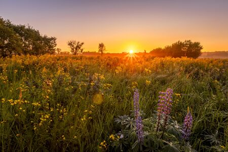 Lever du soleil sur un champ couvert de fleurs sauvages en saison estivale avec du brouillard et des arbres sur fond le matin. Paysage.