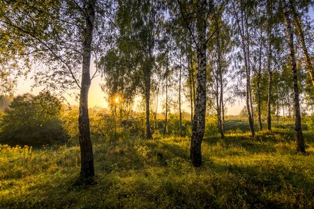 A scene of sunrise in a birch forest on a sunny summer morning with fog. Landscape. Stockfoto