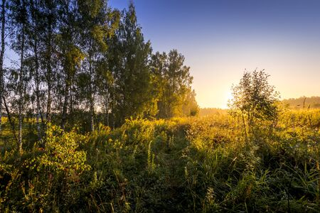 Sunrise on a field in summer season with fog and birch trees in morning. Landscape. Stockfoto