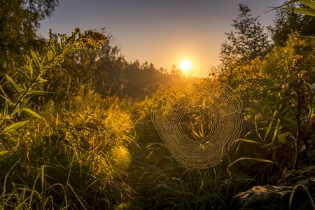 Spider web against sunrise in the field covered fogs in summer.