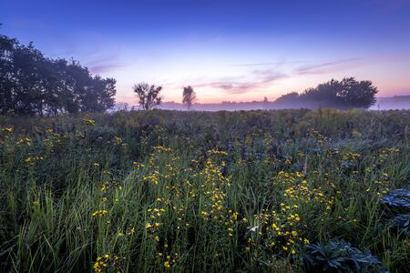 Twilight on a field covered with wild flowers in a summer season with fog and trees on a background in morning. Landscape. Stockfoto