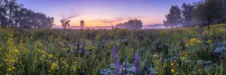 Twilight on a field covered with wild flowers in a summer season with fog and trees on a background in morning. Landscape. Panorama. Stockfoto