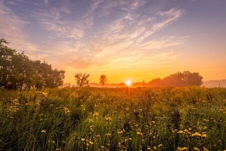 Sunrise on a field covered with wild flowers in summer season with fog and trees with a cloudy sky background in morning. Landscape.