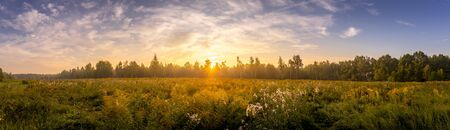 Sunrise on a field covered with wild flowers in summer season with fog and trees with a cloudy sky background in morning. Landscape. Panorama.