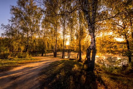 A scene of sunrise near the pond with birches with yellow leaves on a sunny golden autumn morning. Fog above the water. Landscape. Leaf fall. 版權商用圖片