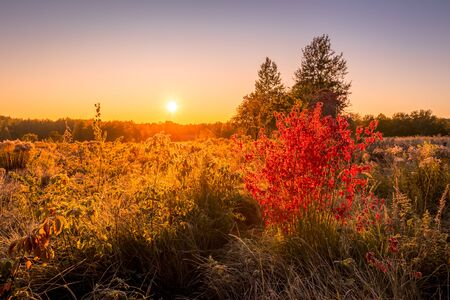 Sunrise on a field with grass and bush with red leaves covered with frost in early autumn morning and trees on a background. Landscape.