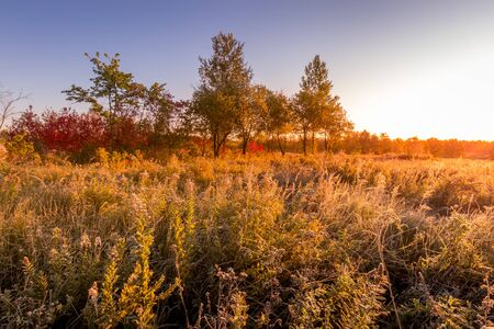 Scene of sunrise on a field with grass covered with frost in early autumn morning and trees on a background. Landscape.