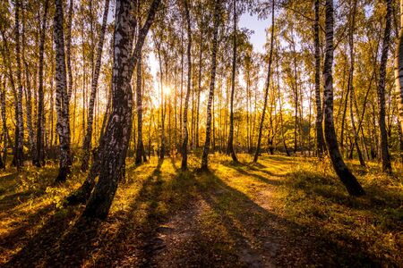 A scene of sunrise in a birch forest with yellow leaves on a sunny golden autumn morning with fog near the pond. Landscape. Leaf fall.