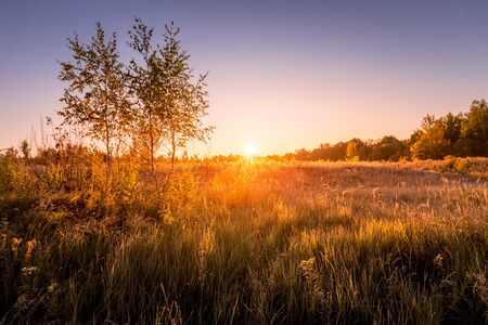 Sunrise on a field with grass covered with frost in early autumn morning and trees on a background.