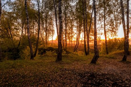 Sunrise in a birch forest with fallen leaves on a sunny autumn morning with fog. Landscape. Stock fotó
