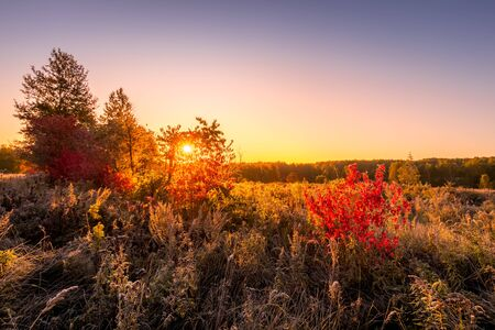 Scene of sunrise on a field with grass and bush with red leaves covered with frost in early autumn morning and trees on a background. Landscape.