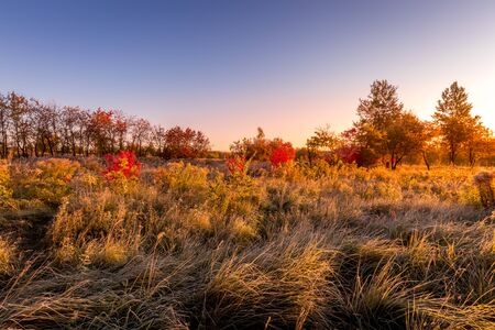 Scene of sunrise on a field with grass covered with frost in early autumn morning and trees on a background.