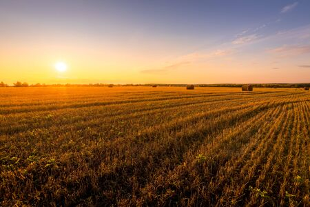 Sunset on the field with haystacks in Autumn season. Rural landscape with cloudy sky background. Golden harvest of wheat. Landscape. 写真素材