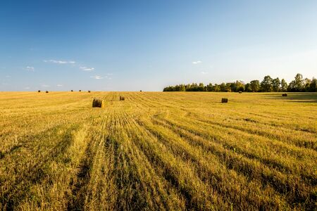 Haystacks on the field in autumn sunny day. Rural landscape with cloudy sky background. Golden harvest of wheat or rye in evening.