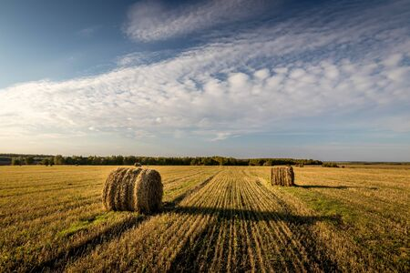 Haystacks on the field in autumn sunny daywith cloudy sky background. Rural landscape. Golden harvest of wheat in evening. 写真素材
