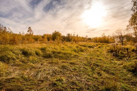 Sunset on a field with grass, trees and dramatic cloudy sky background in golden autumn evening. Landscape. 写真素材