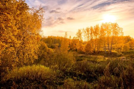 Sunset on a field with grass, trees and dramatic cloudy sky background in golden autumn evening. Landscape. Leaf fall.