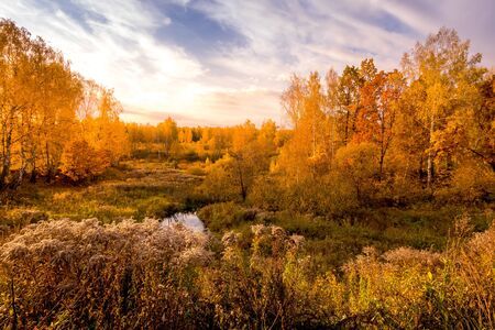 Sunset on a field with grass, birches with yellow leaves, other trees and dramatic cloudy sky background in golden autumn evening. Landscape. Leaf fall.