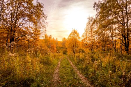 Sunset on a field with grass, footpath, trees and dramatic cloudy sky background in golden autumn evening. Landscape.